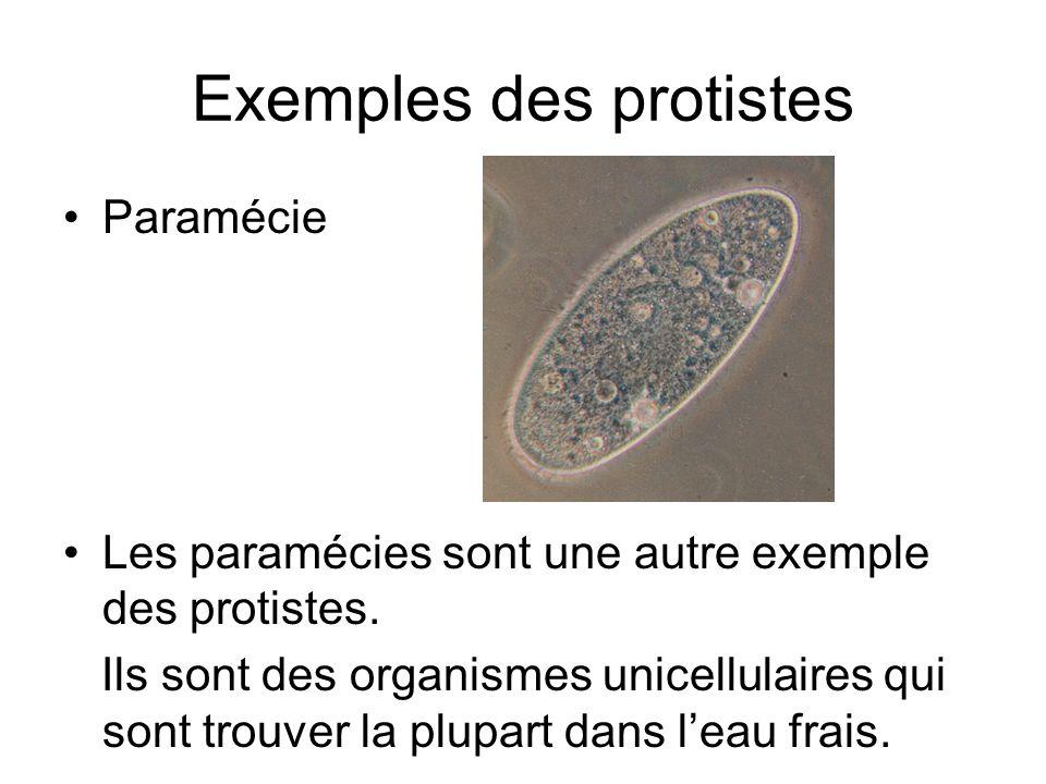 Exemples des protistes Paramécie Les paramécies sont une autre exemple des protistes. Ils sont des organismes unicellulaires qui sont trouver la plupa