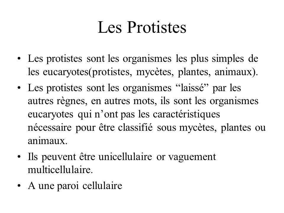 Les Protistes Les protistes sont les organismes les plus simples de les eucaryotes(protistes, mycètes, plantes, animaux). Les protistes sont les organ