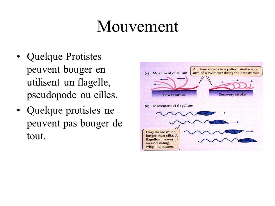 Mouvement Quelque Protistes peuvent bouger en utilisent un flagelle, pseudopode ou cilles. Quelque protistes ne peuvent pas bouger de tout.