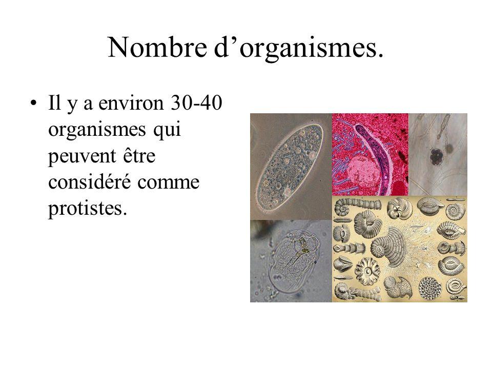 Nombre dorganismes. Il y a environ 30-40 organismes qui peuvent être considéré comme protistes.