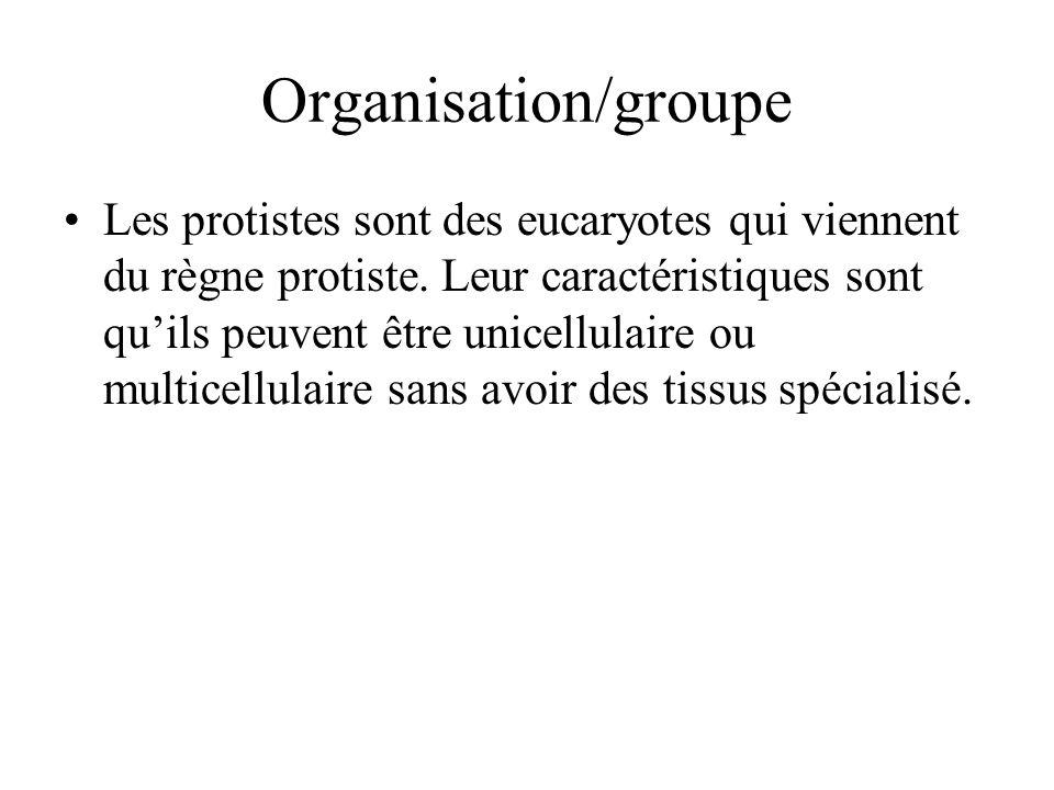 Organisation/groupe Les protistes sont des eucaryotes qui viennent du règne protiste. Leur caractéristiques sont quils peuvent être unicellulaire ou m