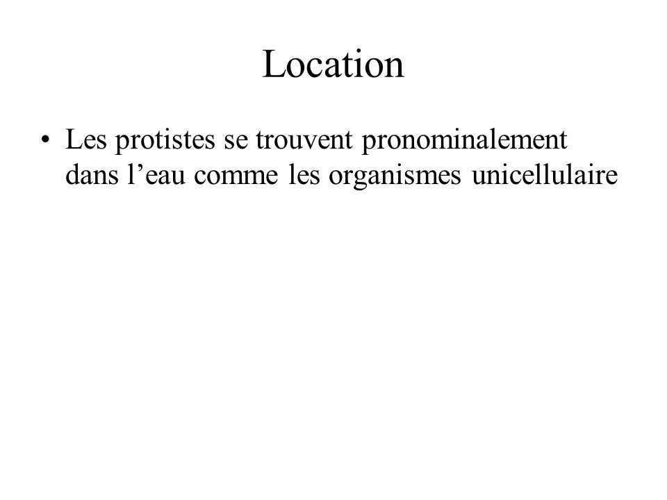 Location Les protistes se trouvent pronominalement dans leau comme les organismes unicellulaire