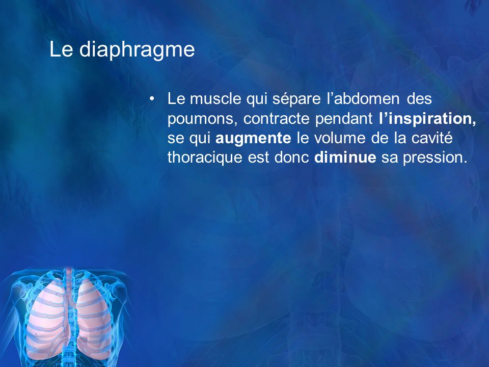 Le diaphragme Le muscle qui sépare labdomen des poumons, contracte pendant linspiration, se qui augmente le volume de la cavité thoracique est donc diminue sa pression.