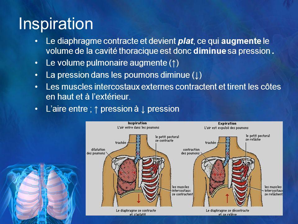 Inspiration Le diaphragme contracte et devient plat, ce qui augmente le volume de la cavité thoracique est donc diminue sa pression.