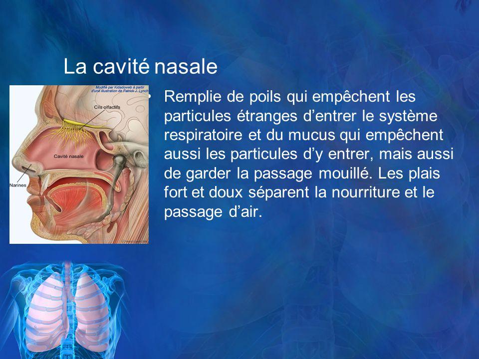 La cavité nasale Remplie de poils qui empêchent les particules étranges dentrer le système respiratoire et du mucus qui empêchent aussi les particules dy entrer, mais aussi de garder la passage mouillé.