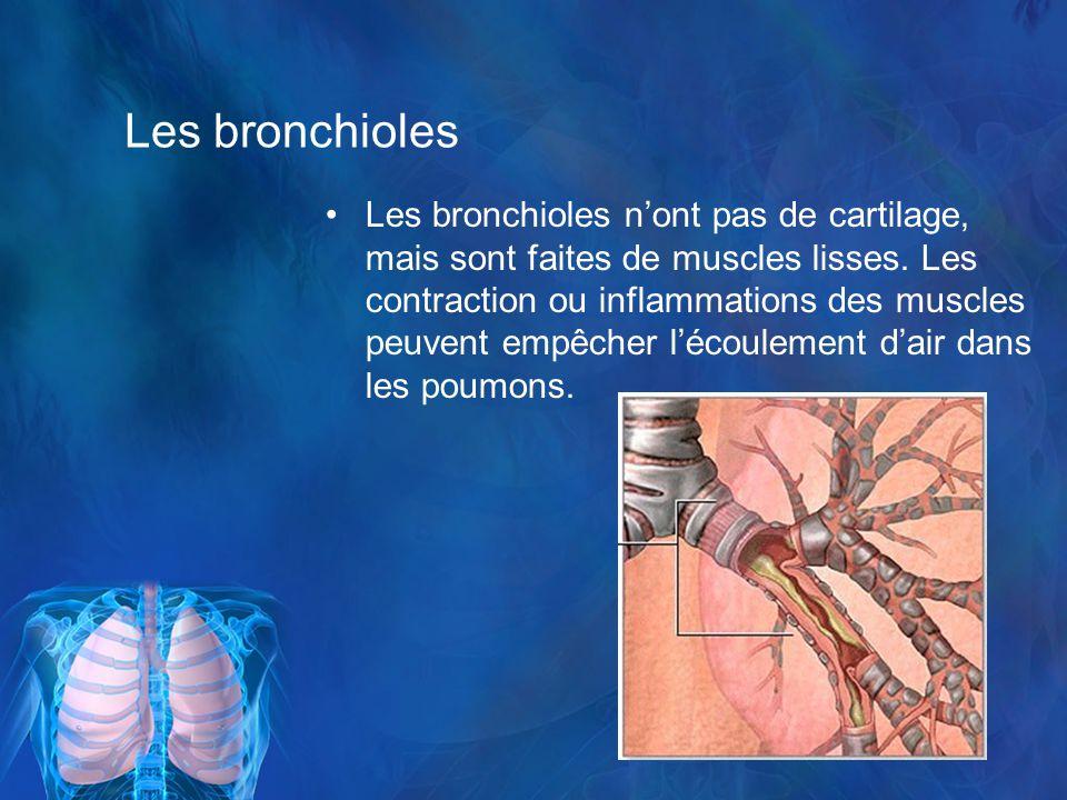 Les bronchioles Les bronchioles nont pas de cartilage, mais sont faites de muscles lisses.