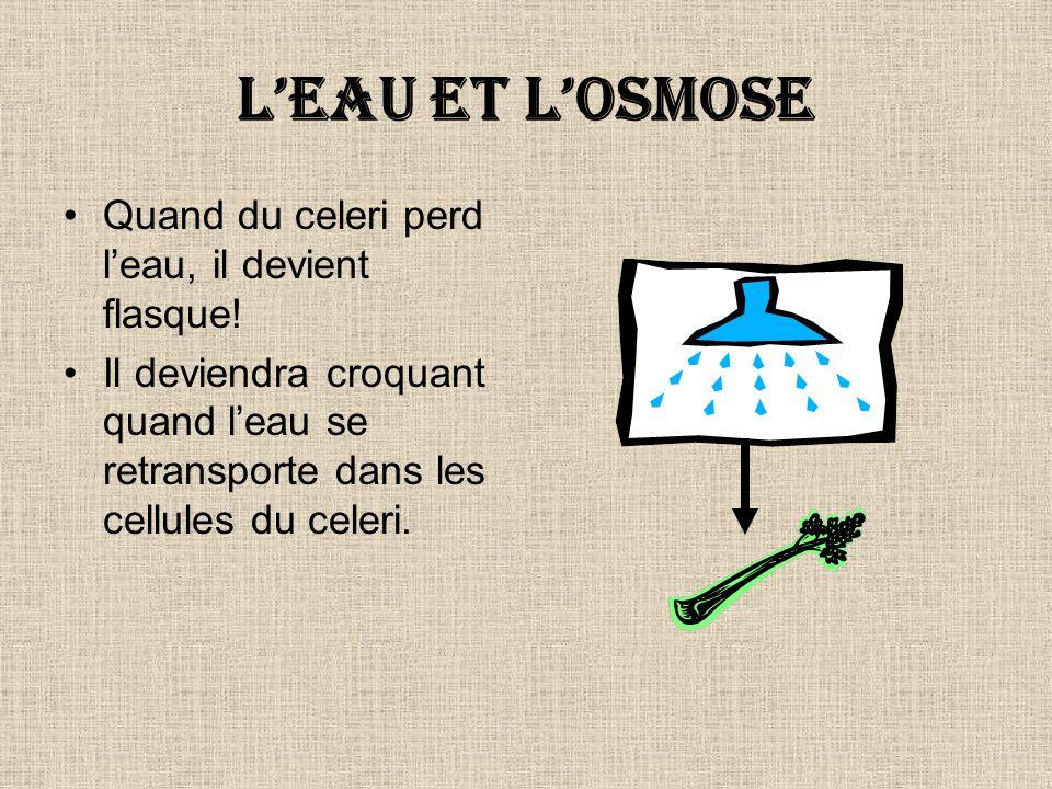 La diffusion et losmose Leau se transporte facilement par la membrane cellulaire par la diffusion.