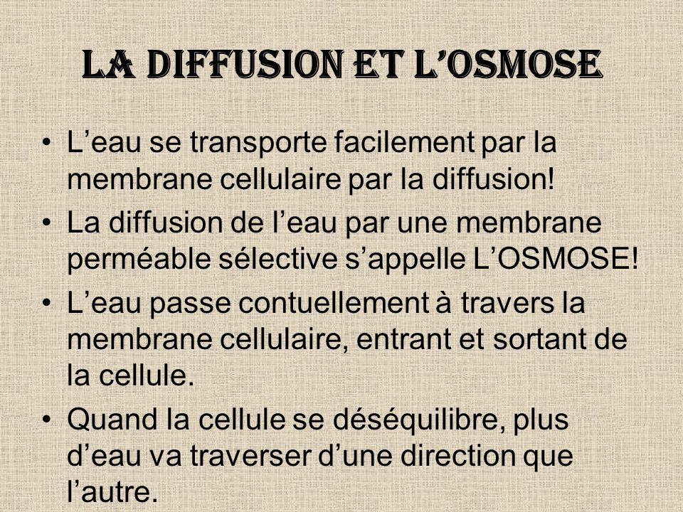 La diffusion et losmose Leau se transporte facilement par la membrane cellulaire par la diffusion! La diffusion de leau par une membrane perméable sél