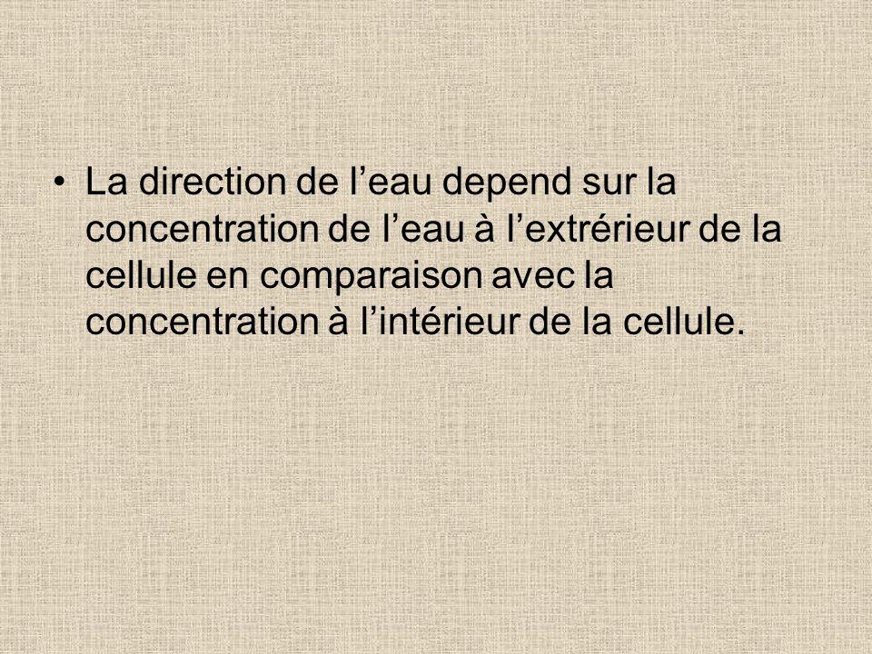 La direction de leau depend sur la concentration de leau à lextrérieur de la cellule en comparaison avec la concentration à lintérieur de la cellule.