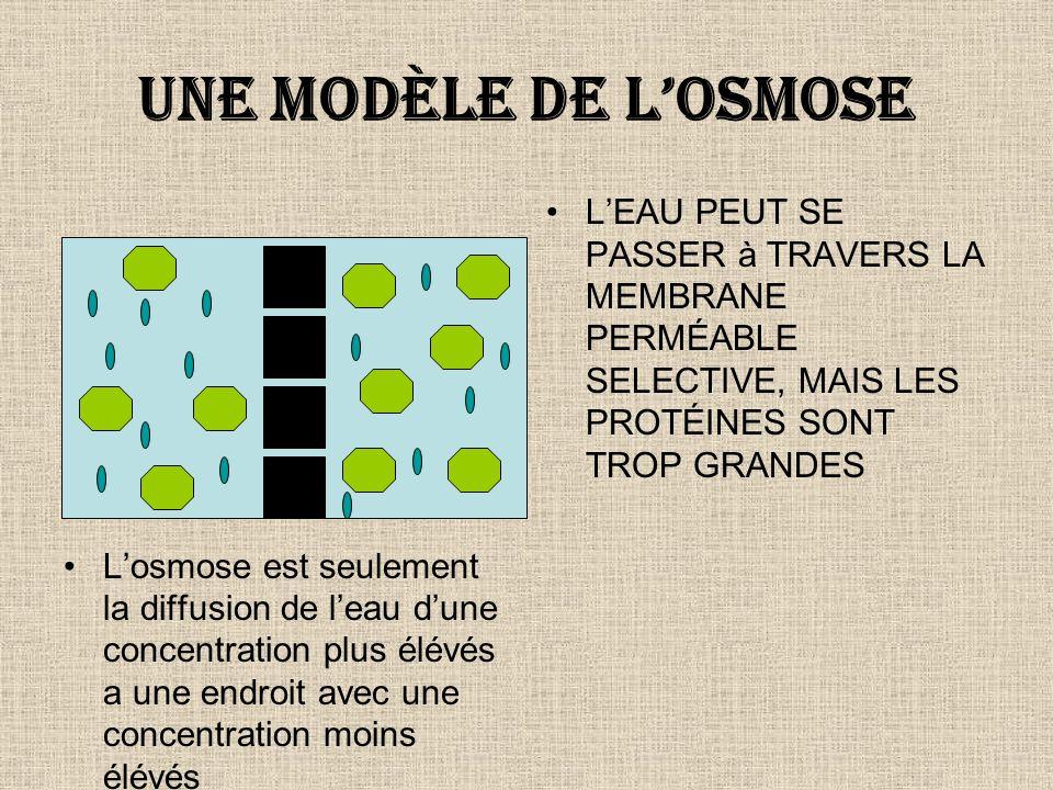 UNE MODèLE DE LOSMOSE Losmose est seulement la diffusion de leau dune concentration plus élévés a une endroit avec une concentration moins élévés LEAU