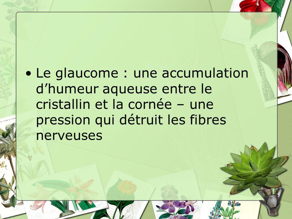 Le glaucome : une accumulation dhumeur aqueuse entre le cristallin et la cornée – une pression qui détruit les fibres nerveuses