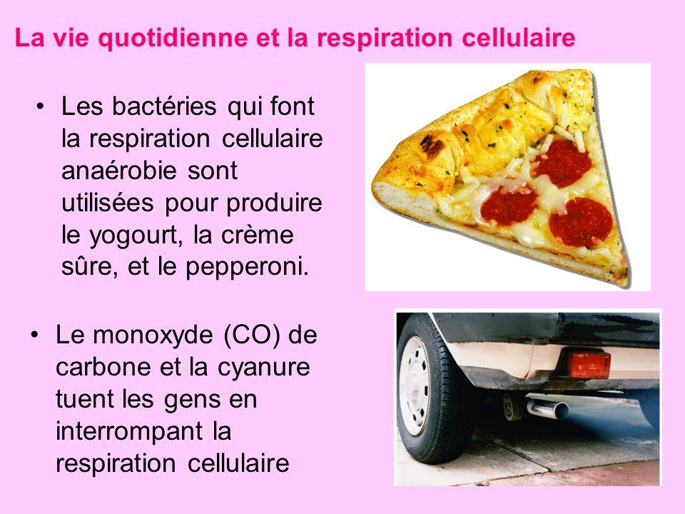 Les bactéries qui font la respiration cellulaire anaérobie sont utilisées pour produire le yogourt, la crème sûre, et le pepperoni. Le monoxyde (CO) d