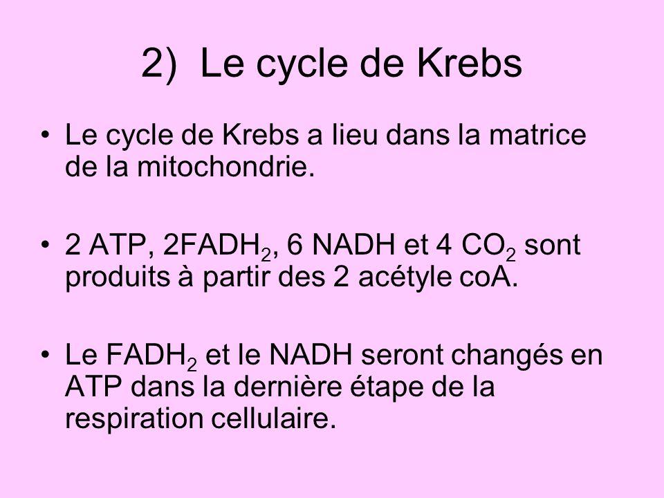 2) Le cycle de Krebs Le cycle de Krebs a lieu dans la matrice de la mitochondrie. 2 ATP, 2FADH 2, 6 NADH et 4 CO 2 sont produits à partir des 2 acétyl