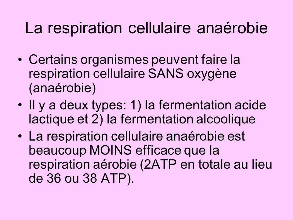La respiration cellulaire anaérobie Certains organismes peuvent faire la respiration cellulaire SANS oxygène (anaérobie) Il y a deux types: 1) la ferm