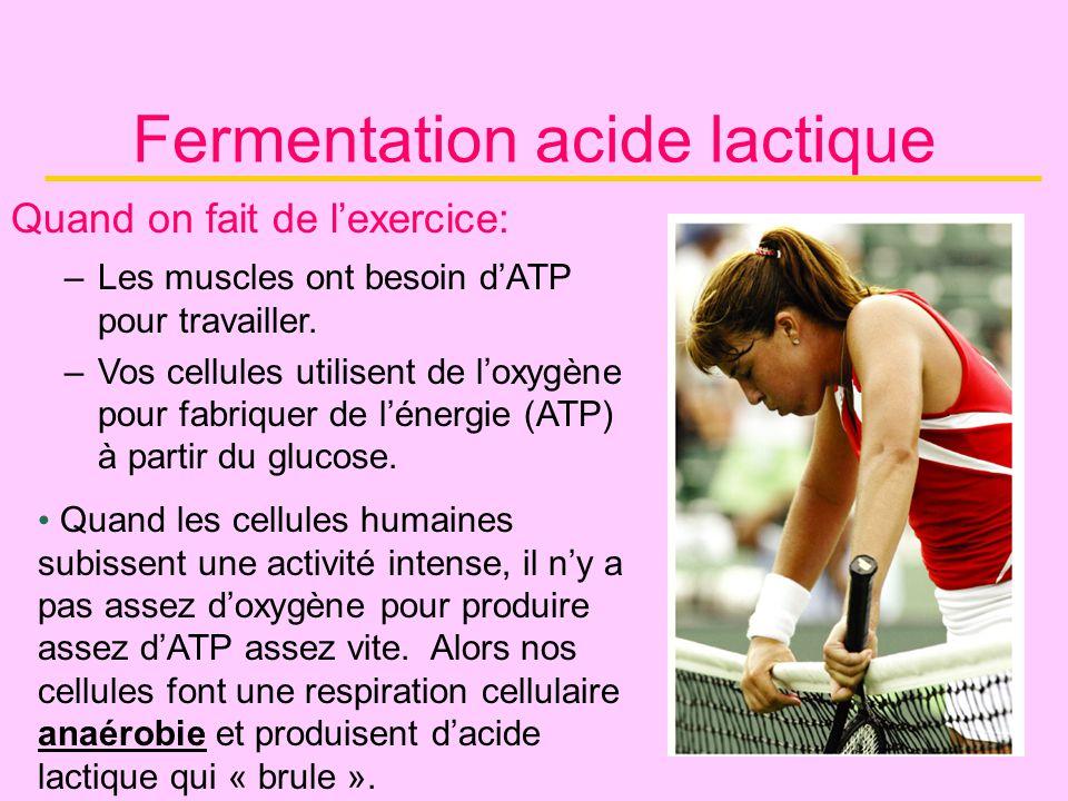 Fermentation acide lactique Quand on fait de lexercice: –Les muscles ont besoin dATP pour travailler. –Vos cellules utilisent de loxygène pour fabriqu