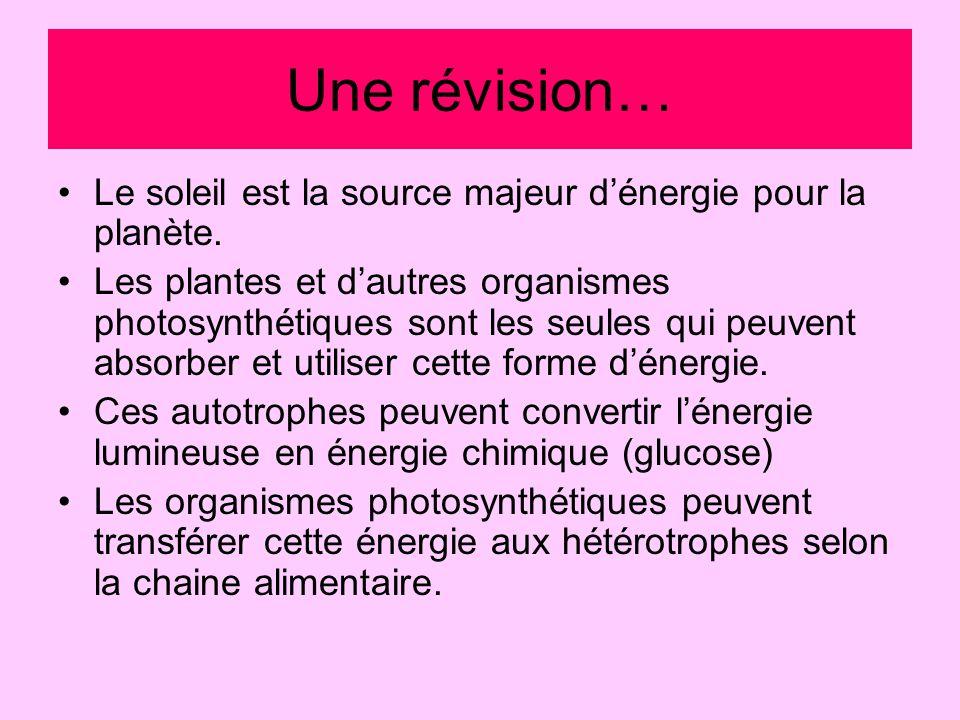 Cycle de Carbone