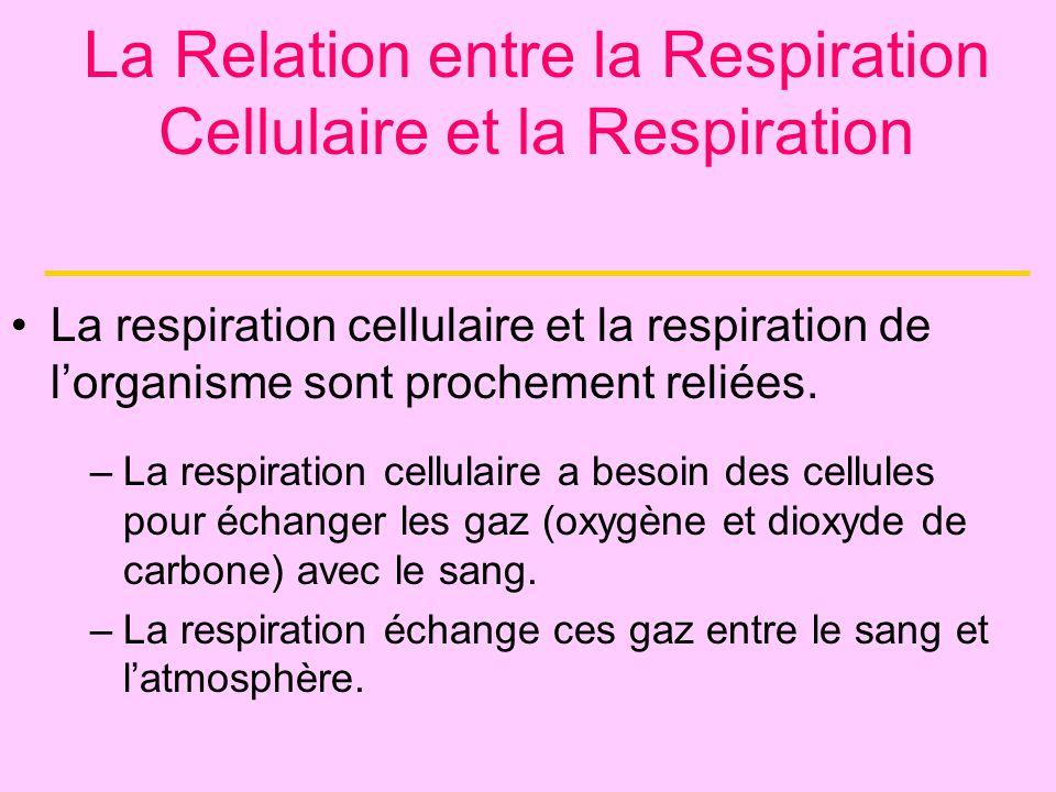 La respiration cellulaire et la respiration de lorganisme sont prochement reliées. –La respiration cellulaire a besoin des cellules pour échanger les