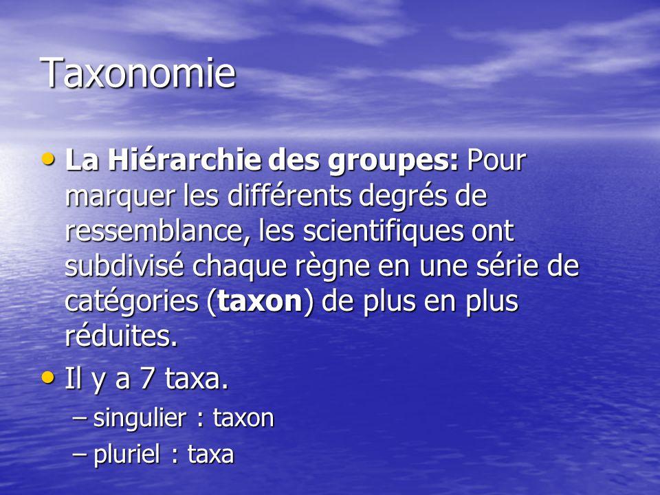 Taxonomie La Hiérarchie des groupes: Pour marquer les différents degrés de ressemblance, les scientifiques ont subdivisé chaque règne en une série de