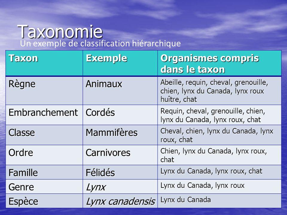 Taxonomie TaxonExemple Organismes compris dans le taxon RègneAnimaux Abeille, requin, cheval, grenouille, chien, lynx du Canada, lynx roux huître, cha