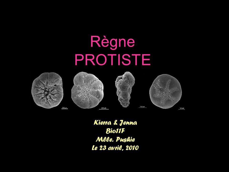 Règne PROTISTE Kierra & Jenna Bio11F Mlle. Pushie Le 23 avril, 2010