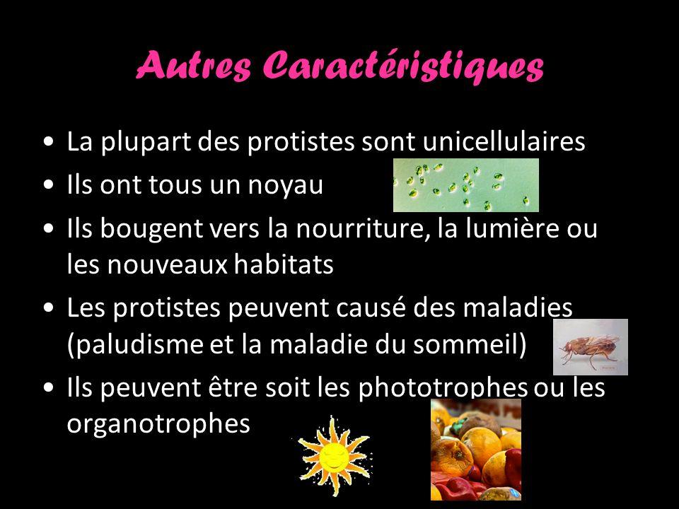 Autres Caractéristiques La plupart des protistes sont unicellulaires Ils ont tous un noyau Ils bougent vers la nourriture, la lumière ou les nouveaux habitats Les protistes peuvent causé des maladies (paludisme et la maladie du sommeil) Ils peuvent être soit les phototrophes ou les organotrophes