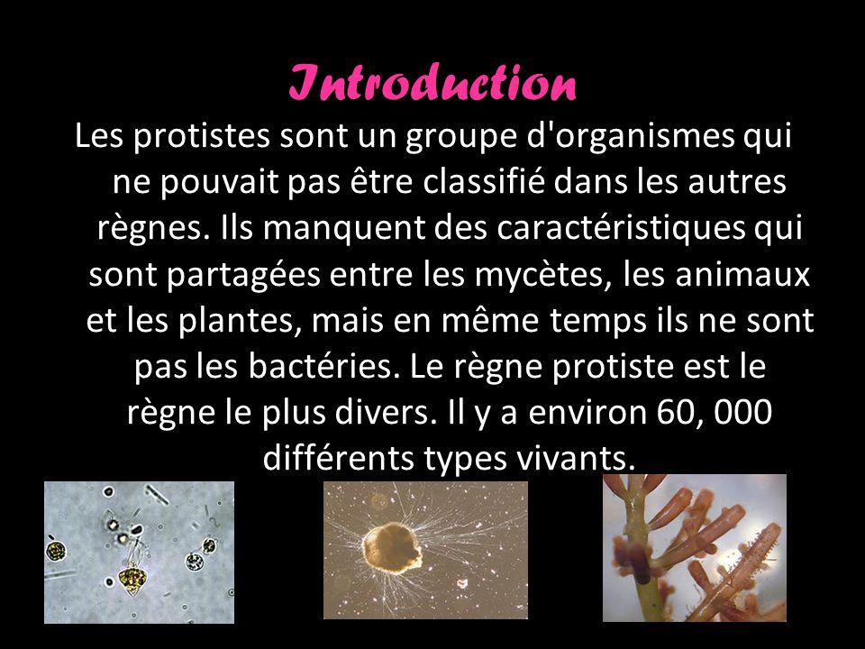 Caractéristiques Les protistes peuvent être unicellulaires ou multicellulaires Ils sont les eucaryotes les plus simples Peuvent être autotrophes ou hétérotrophes Reproduit des fois sexuellement et des fois asexuelles Certains protistes ont une paroi cellulaire et certaines formes n ont pas