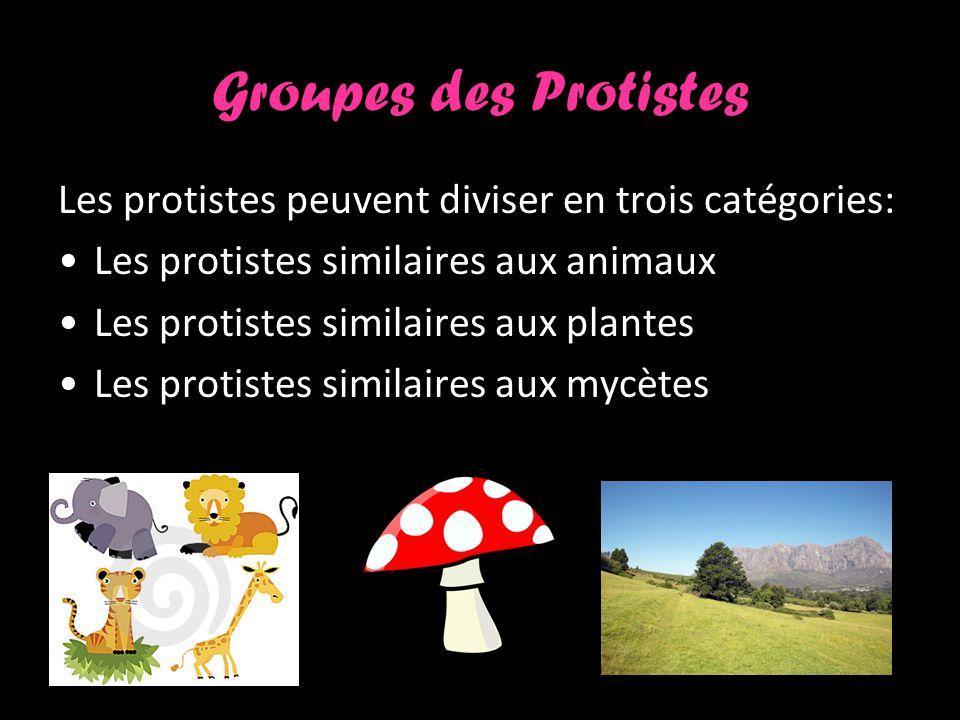 Groupes des Protistes Les protistes peuvent diviser en trois catégories: Les protistes similaires aux animaux Les protistes similaires aux plantes Les protistes similaires aux mycètes