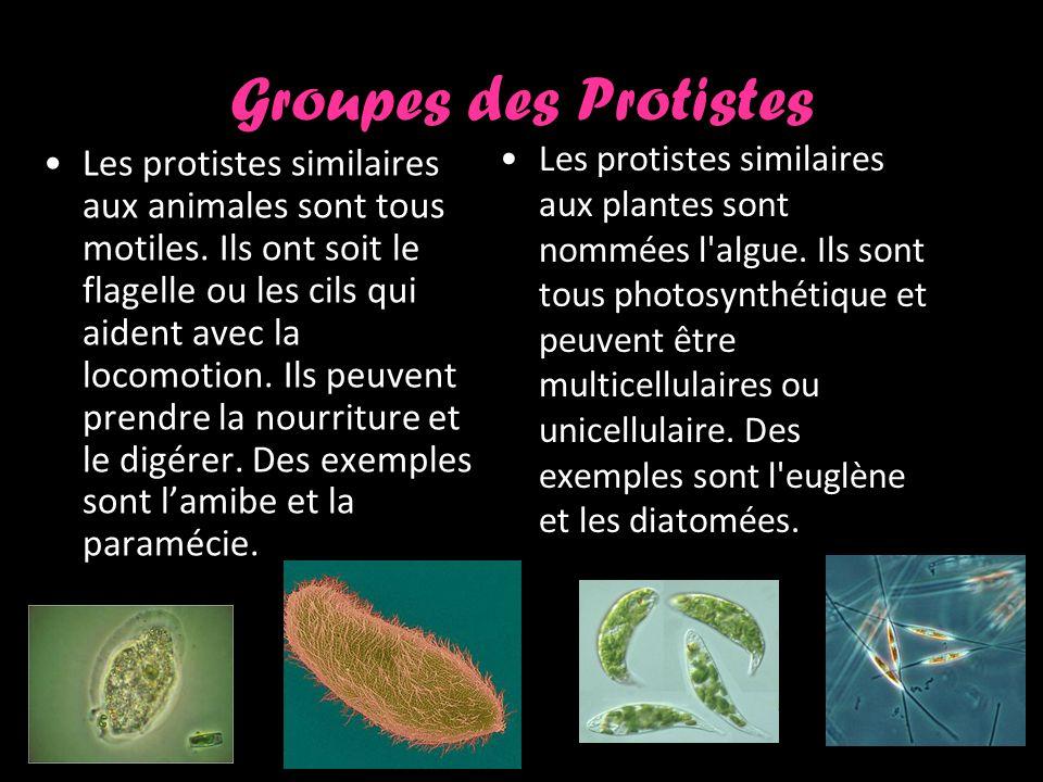 Groupes des Protistes Les protistes similaires aux animales sont tous motiles.