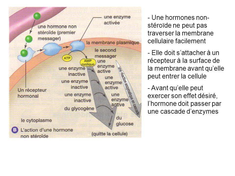 - Une hormones non- stéroïde ne peut pas traverser la membrane cellulaire facilement - Elle doit sattacher à un récepteur à la surface de la membrane