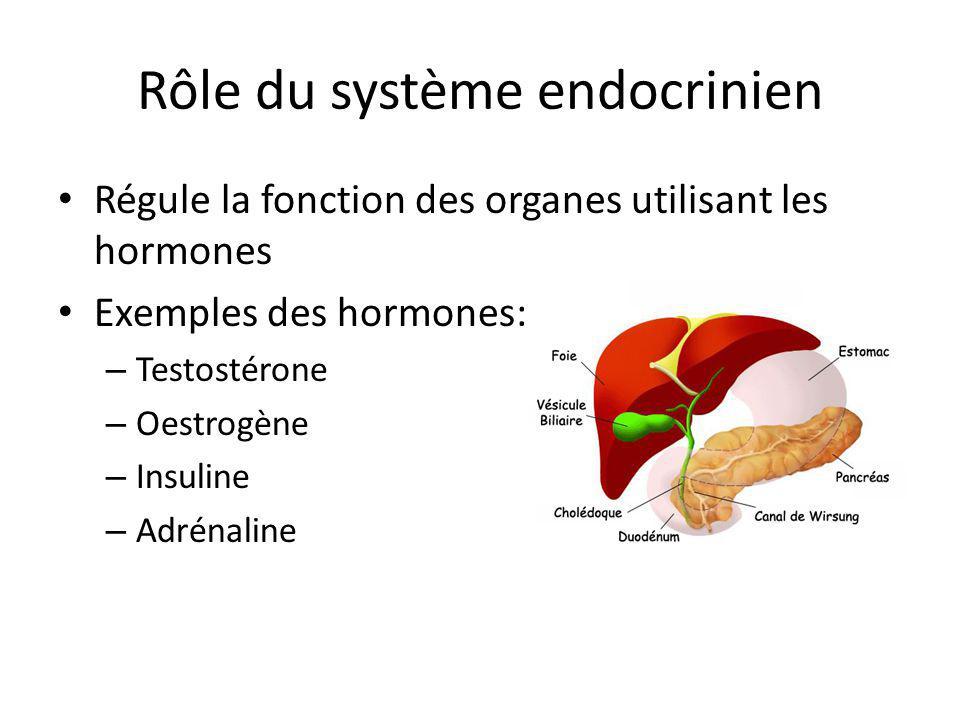 Rôle du système endocrinien Régule la fonction des organes utilisant les hormones Exemples des hormones: – Testostérone – Oestrogène – Insuline – Adré