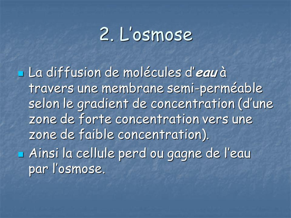 2. Losmose La diffusion de molécules deau à travers une membrane semi-perméable selon le gradient de concentration (dune zone de forte concentration v