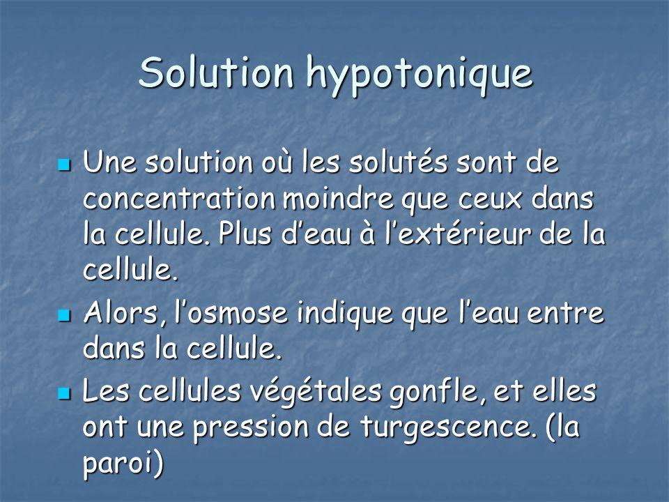 Solution hypotonique Une solution où les solutés sont de concentration moindre que ceux dans la cellule. Plus deau à lextérieur de la cellule. Une sol