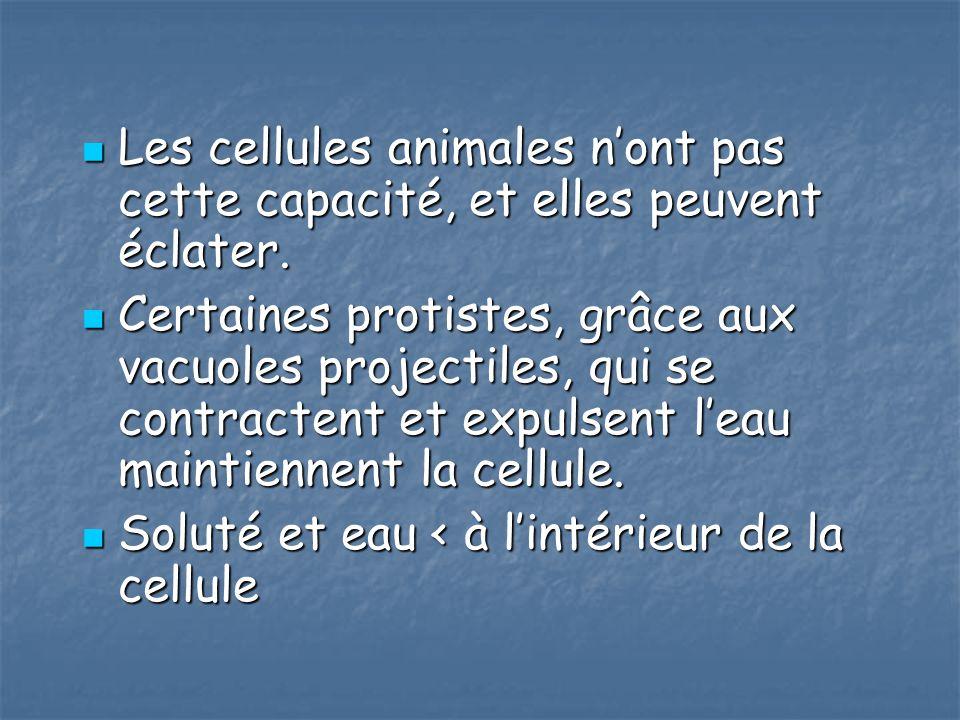 Les cellules animales nont pas cette capacité, et elles peuvent éclater. Les cellules animales nont pas cette capacité, et elles peuvent éclater. Cert
