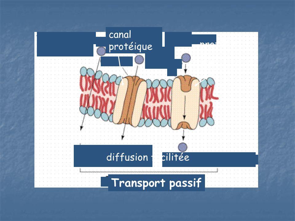 Transport passif diffusion diffusion facilitée protéine porteuse canal protéique