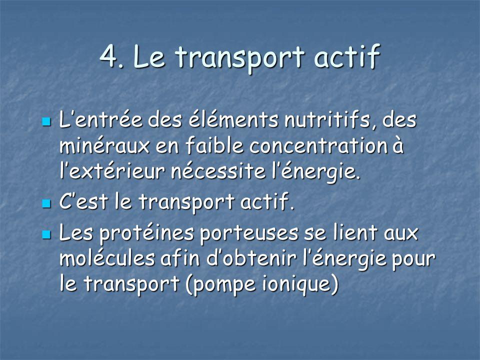 4. Le transport actif Lentrée des éléments nutritifs, des minéraux en faible concentration à lextérieur nécessite lénergie. Lentrée des éléments nutri