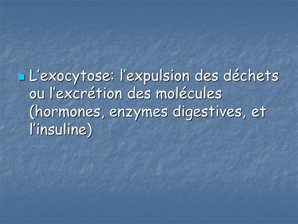 Lexocytose: lexpulsion des déchets ou lexcrétion des molécules (hormones, enzymes digestives, et linsuline) Lexocytose: lexpulsion des déchets ou lexc
