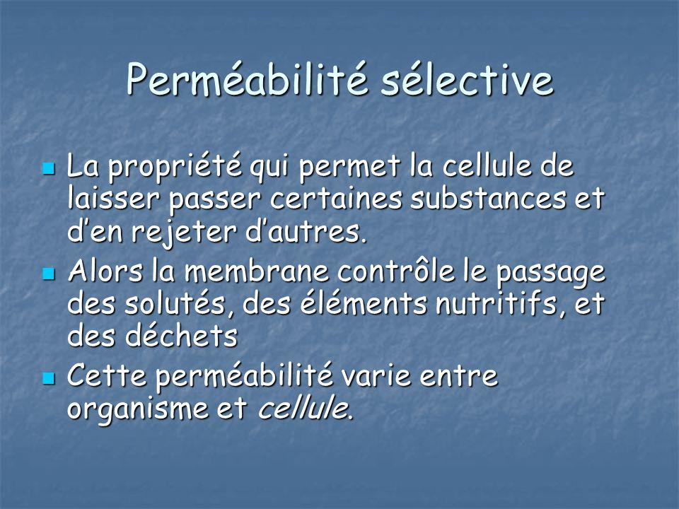 Perméabilité sélective La propriété qui permet la cellule de laisser passer certaines substances et den rejeter dautres. La propriété qui permet la ce