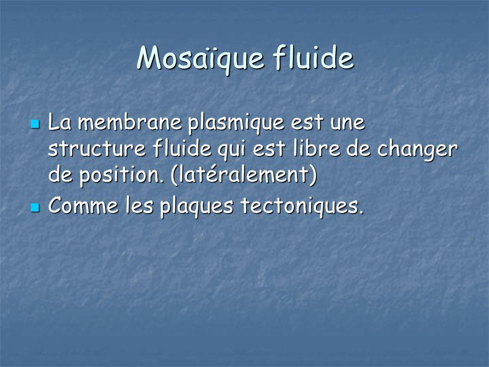 Mosaïque fluide La membrane plasmique est une structure fluide qui est libre de changer de position. (latéralement) La membrane plasmique est une stru