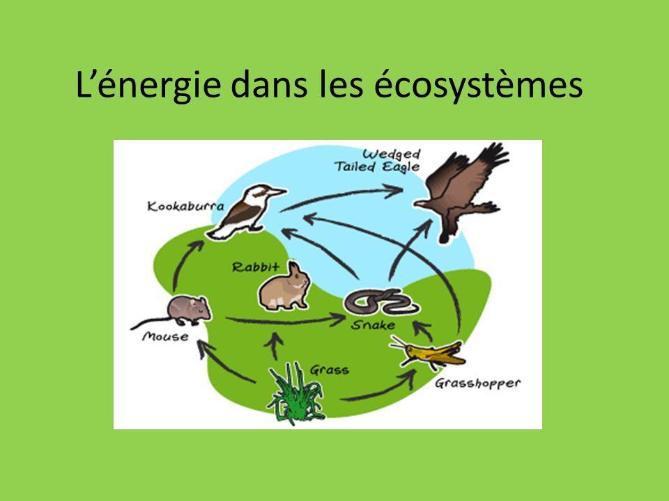Chaîne alimentaire Montre comment chaque organisme obtient sa nourriture Les flèches indiquent la direction de lénergie Ex: Poisson Ours 2 Chaine alimentaire = Food Chain