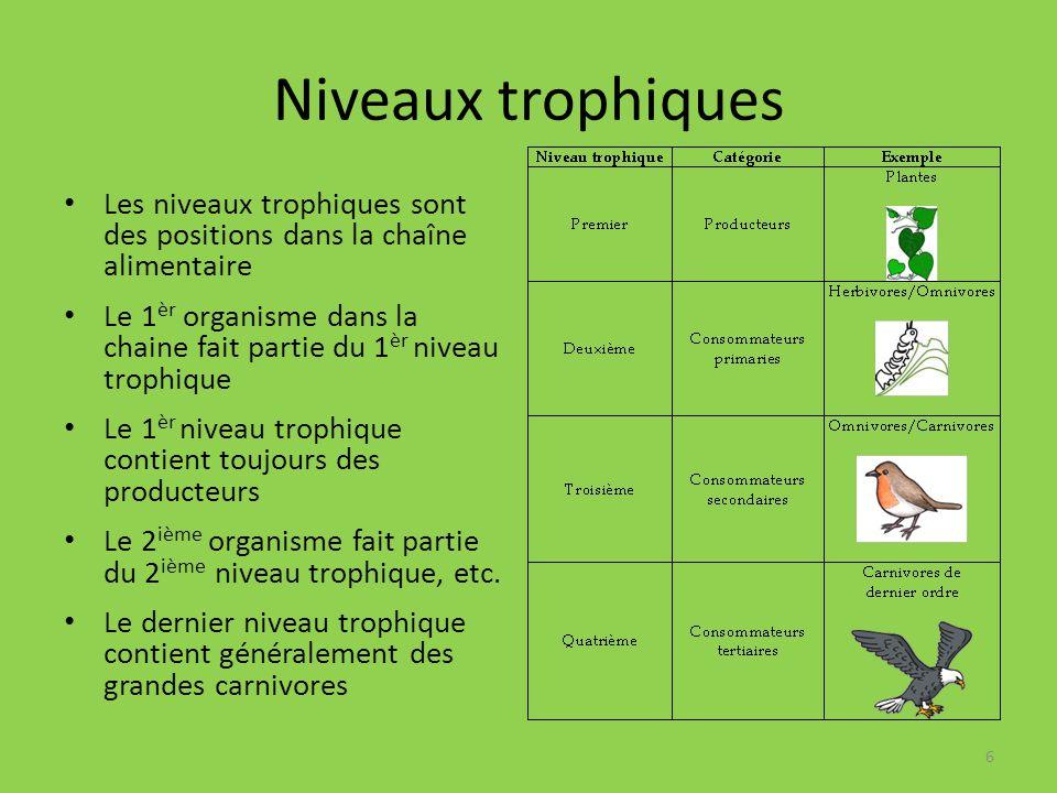 Niveaux trophiques Les niveaux trophiques sont des positions dans la chaîne alimentaire Le 1 èr organisme dans la chaine fait partie du 1 èr niveau trophique Le 1 èr niveau trophique contient toujours des producteurs Le 2 ième organisme fait partie du 2 ième niveau trophique, etc.