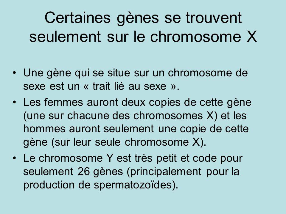 Certaines gènes se trouvent seulement sur le chromosome X Une gène qui se situe sur un chromosome de sexe est un « trait lié au sexe ». Les femmes aur