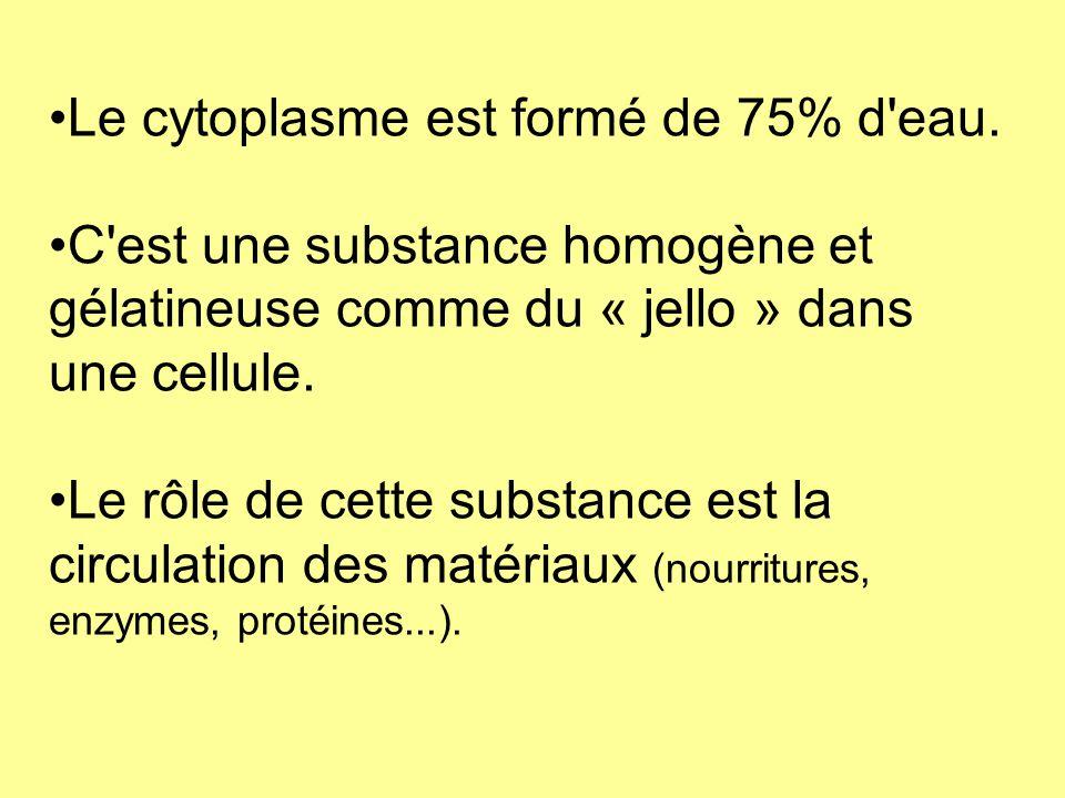 Le cytoplasme est formé de 75% d'eau. C'est une substance homogène et gélatineuse comme du « jello » dans une cellule. Le rôle de cette substance est