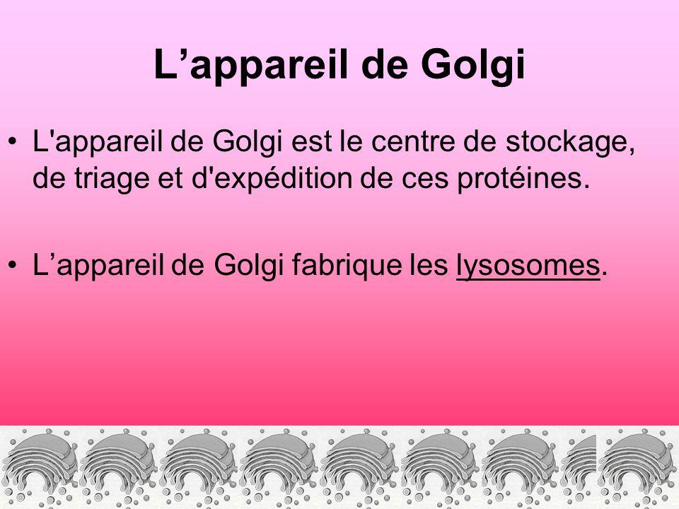 Lappareil de Golgi L'appareil de Golgi est le centre de stockage, de triage et d'expédition de ces protéines. Lappareil de Golgi fabrique les lysosome