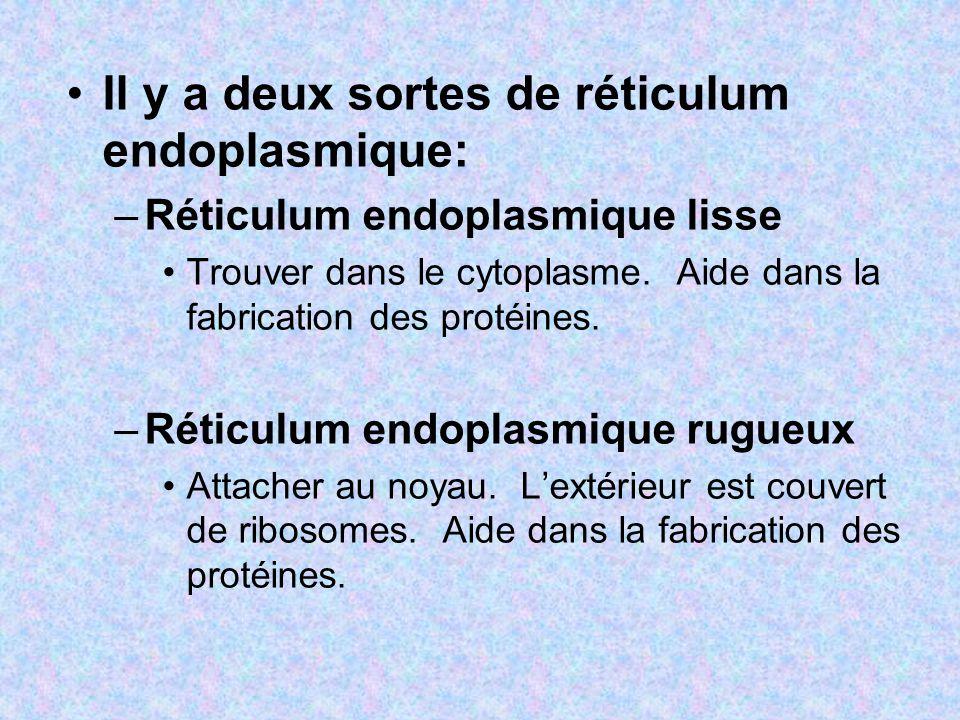 Il y a deux sortes de réticulum endoplasmique: –Réticulum endoplasmique lisse Trouver dans le cytoplasme. Aide dans la fabrication des protéines. –Rét