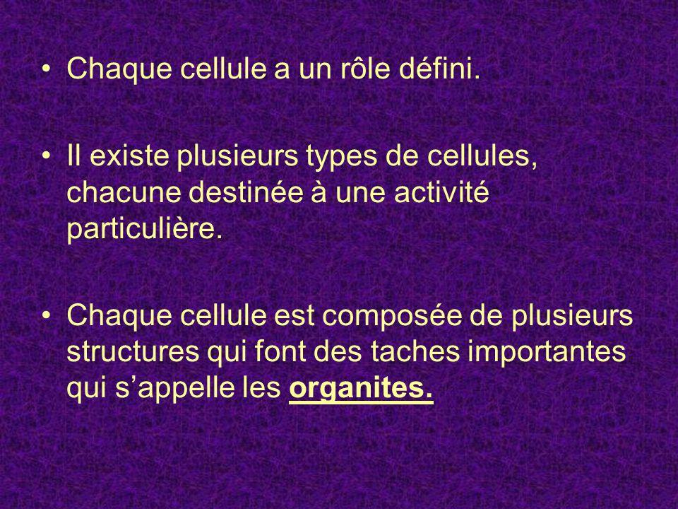 Chaque cellule a un rôle défini. Il existe plusieurs types de cellules, chacune destinée à une activité particulière. Chaque cellule est composée de p