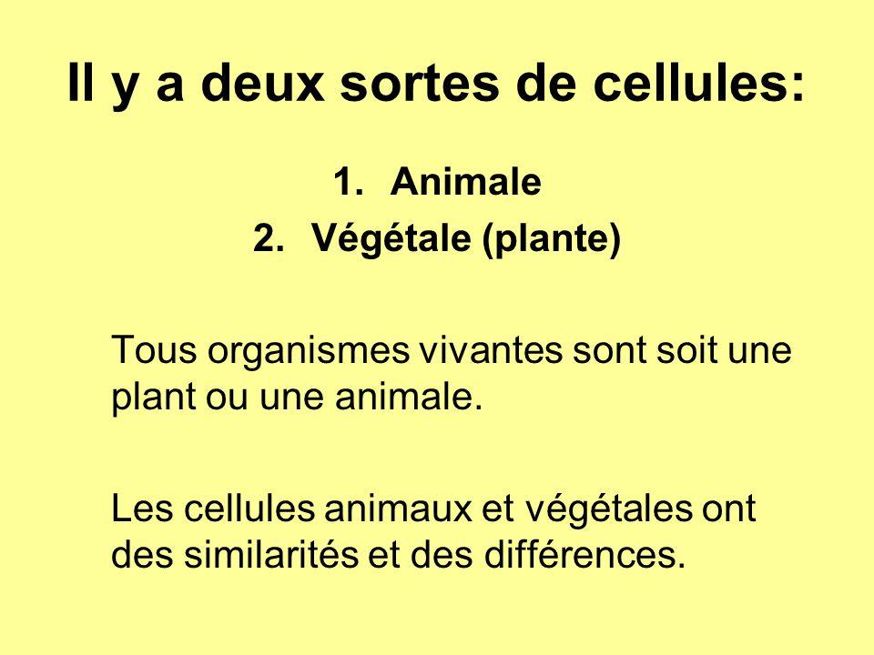 Il y a deux sortes de cellules: 1.Animale 2.Végétale (plante) Tous organismes vivantes sont soit une plant ou une animale. Les cellules animaux et vég