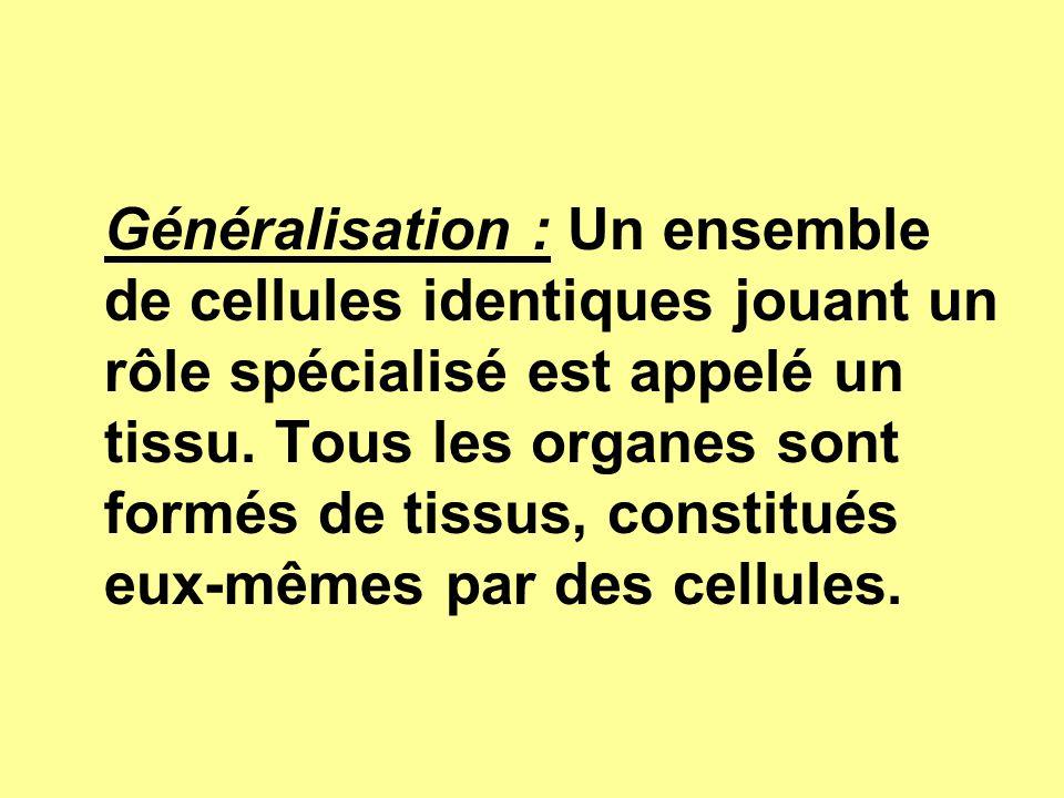 Généralisation : Un ensemble de cellules identiques jouant un rôle spécialisé est appelé un tissu. Tous les organes sont formés de tissus, constitués