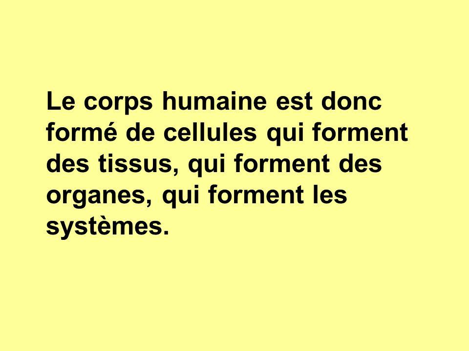 Le corps humaine est donc formé de cellules qui forment des tissus, qui forment des organes, qui forment les systèmes.