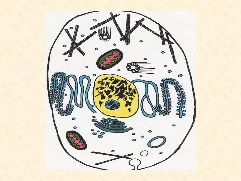 Généralisation : Un ensemble de cellules identiques jouant un rôle spécialisé est appelé un tissu.