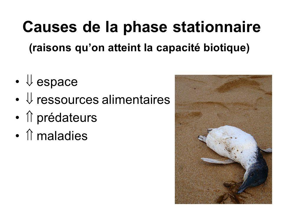 Causes de la phase stationnaire espace ressources alimentaires prédateurs maladies (raisons quon atteint la capacité biotique)